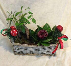 """Σύνθεση με """"Χριστουγεννιάτικα"""" φυτά σε καλάθι"""