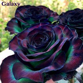 "Exclusive ""Galaxy""  (10) stems Roses Arrangement In Pot, Basket or Vase."