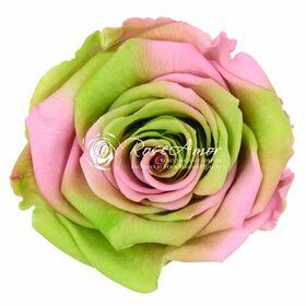 """Ανθοπωλείο. (1) Βαλσαμωμένο """"4ever"""" τριαντάφυλλο """"Ουράνιο Τόξο"""" σε """"Γυάλινο Θόλο"""" Διαμ 12εκ. χ 14εκ."""