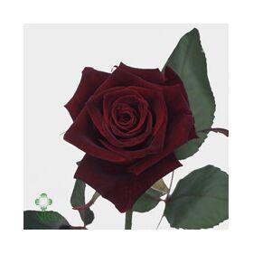 Μαύρα Τριαντάφυλλα Φυσικά (21) τεμ. Black Baccara ! Ανθοδέσμη ή Μπουκέτο.