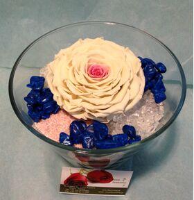 Τριαντάφυλλο βαλσαμωμένο σε σύνθεση. Φυσικό μεγάλο κεφάλι (12cm) επεξεργασμένο!!!