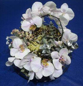 phalaenopsis tray.jpg