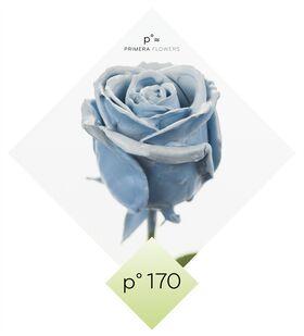 """(10) τριαντάφυλλα  με επικάλυψη """"κεριού"""""""