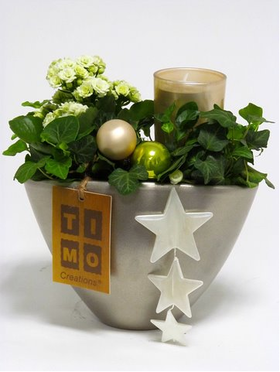 Christmas Plants & Decoration in  Pot