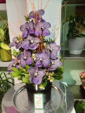vanda orchids arrangement