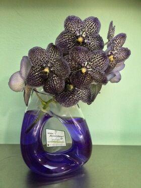 Exclusive vanda orchids in design glass vase.