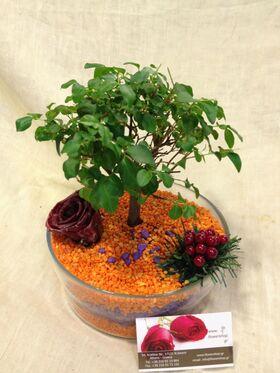 Μπονσάι φυτό σε γυάλινο σκευος με στρώματα διακοσμητικού γυαλιού σε κόκκους