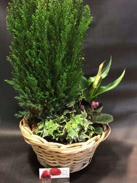"""Σύνθεση με """"Χριστουγεννιάτικα"""" φυτά σε καλάθι !!!"""
