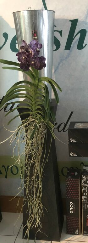 Vanda Orchid σε γυάλινο βάζο